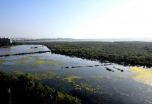 Wetlands in Mumbai